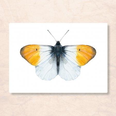 kaart_vlinder